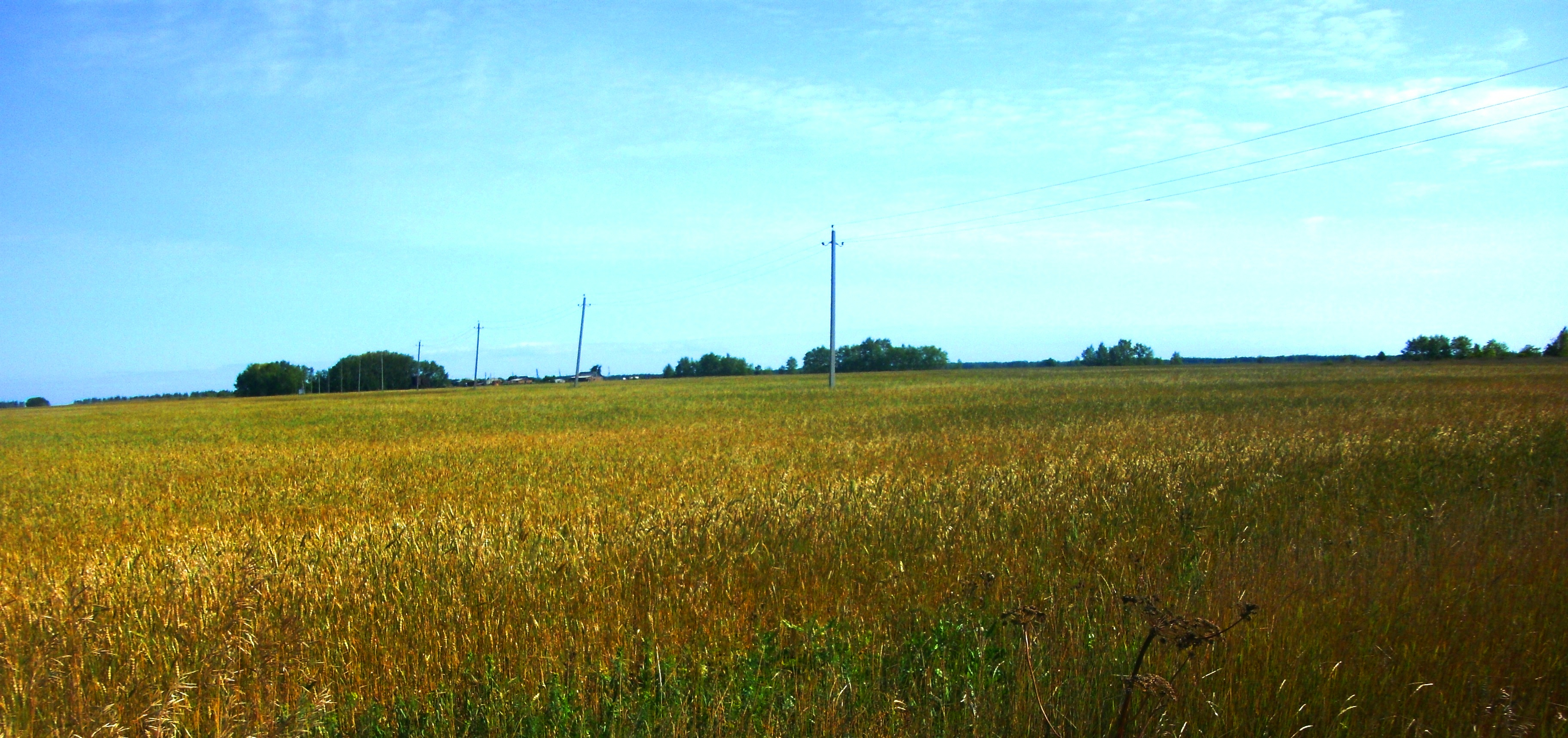 Знакомства русская поляна омская область